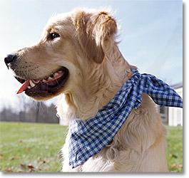 Бандана для собак картинки