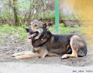 Пропадает без хозяина чудесный друг - собачка Лола.