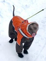 Шью одежду для собак по индивидуальным меркам