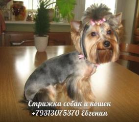 услуги для животных на дому в Спб.