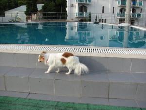 Потерялась собака в районе Можайский г.Москвы