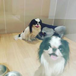 Содержание собаки