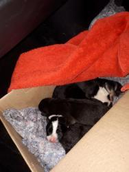 Найдены щенки в районе Измайлово! Просим помочь с передержкой!