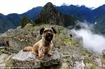 Оскар собака-путешественник