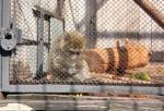 Зоопарк в Екатеринбурге