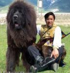 mongol-ovcharka.jpg