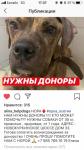 Нужны доноры крови для собаки!!! Москва