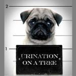 Есть ли у собак права?
