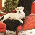 Самое удобное место - кресло