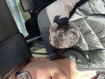 Помогите пожалуйста определить породу щенка