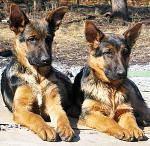 Немецкие клички собак