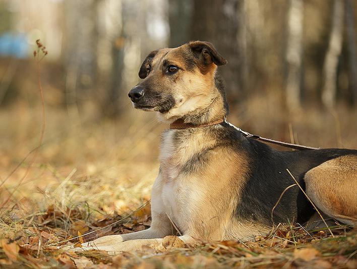 Картинка собаки мухтар