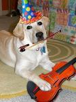 Музыкальные собаки