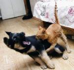 Эта кошка умеет за себя постоять.