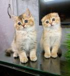 Лечение дирофиляриоза у кошек