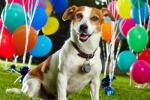 Анастасия - быстрее всех лопает воздушные шарики