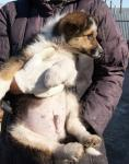бездомный щенок