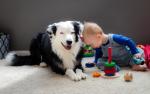 Игры с собакой дома