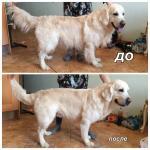 Предлагаем услуги по стрижке собак с выездом на дом