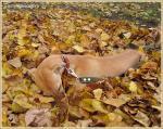 """Старинный вальс """"Осенний сон"""""""