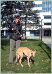 Маленькая робкая собачка Кенга))