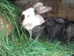 Семейка кроликов