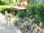 Перс. В саду