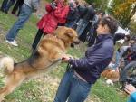 Выставка бездомных животных в Вологде