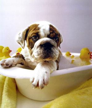 Купить Royal Canin Консерва в Киеве, цена и продажа в