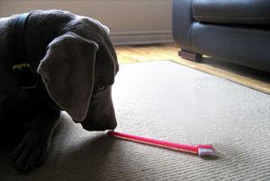 если у собаки неприятный запах из пасти