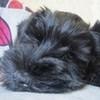 Аватар пользователя Shenia