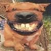 Аватар пользователя KAN270