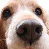 Аватар пользователя Mishele4ka