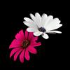 Аватар пользователя vesna2012